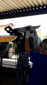 horse examination