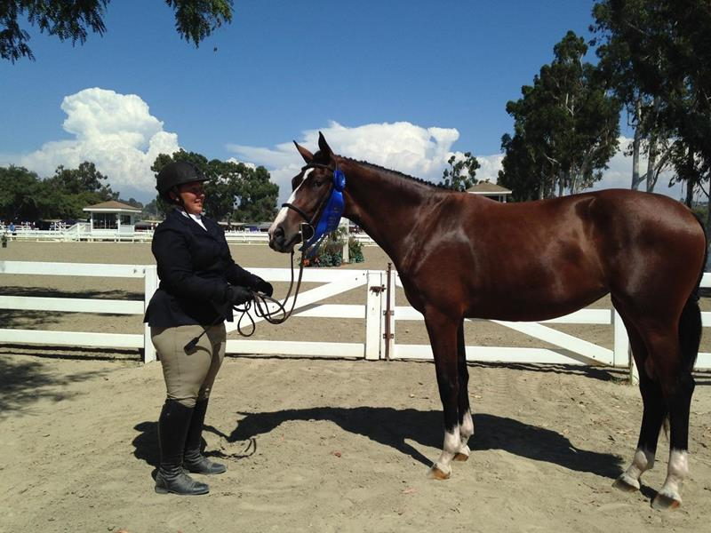 rider and show horse
