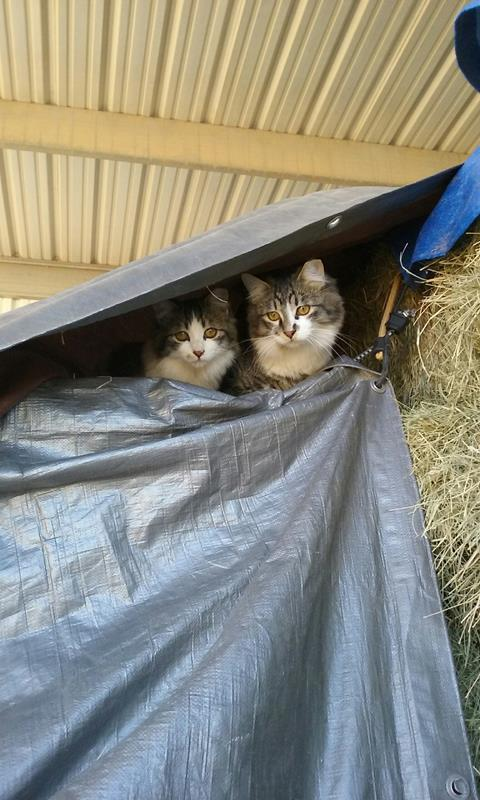 2 cats on hay